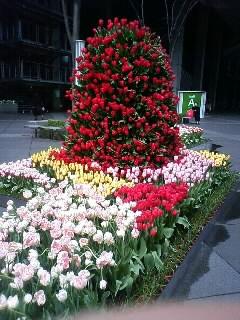 春ですね〜3