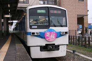 Shibazakura08041302