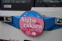 Shibazakura08041303a_2