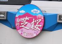 Shibazakura08041304b