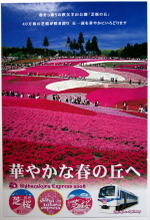 Shibazakura08041305b