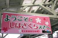 090429shibazakurast01a