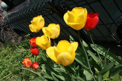 100418flower01