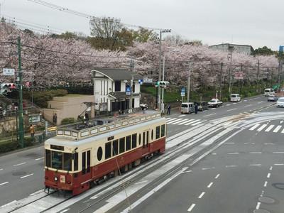 160402sakura01