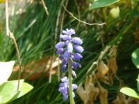 Flower070404