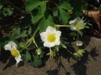 Flower070405