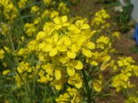 Flower070406b