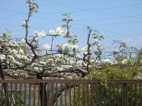 Flower070412