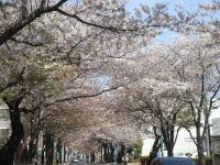 Flower070413