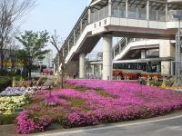 Flower070414a