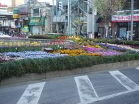 Flower070414b