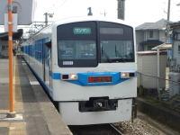 Kyukoshibazakura01
