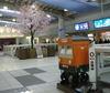 shinagawa-sakura