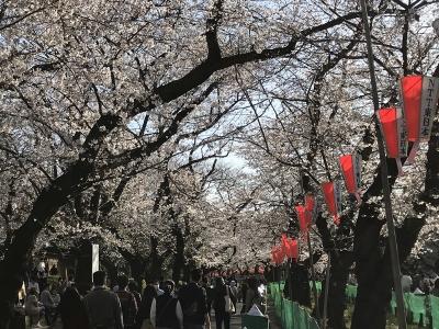 200321sakura03